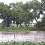 aguas del yaguaron