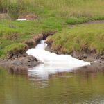 Contaminación Arroyo Ramallo - 20 de Marzo de 2014